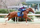 Gun Runner works at Oaklawn Park Feb. 13