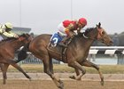 Yorkiepoo Princess Scores Again at Aqueduct