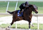 Favorable Reviews of Fasig-Tipton Under Tack Show
