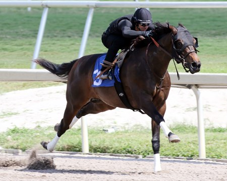 Hip 35 works in :10 flat at the 2017 Fasig-Tipton Gulfstream Sale at Gulfstream Park in South Florida