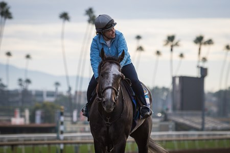 Arrogate jogged Feb. 2 on his first day back to training at Santa Anita
