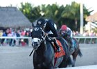 Sharp Azteca rolls to victory in the Gulfstream Park Handicap