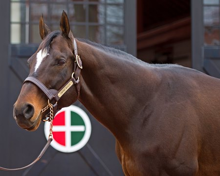 Empire Maker at Gainesway Jan. 12