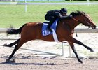 Bernardini Colt Among Horses to Watch at Gulfstream