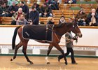 Tattersalls February sale Day 2 sale topper, Lot 387 Dream Waltz (by Oasis Dream, out of Valentine Waltz) 105,000 guineas