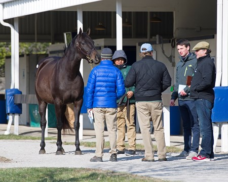 Hip 96 She's All In in foal to Magna Graduate from Vinery Sales, agent for Dispersal of Rockin Z Ranch at Fasig-Tipton Kentucky Winter Mixed Sales in Lexington, Ky., on Feb. 5, 2017.