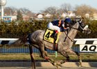 El Areeb winning the Feb. 4 Withers Stakes at Aqueduct