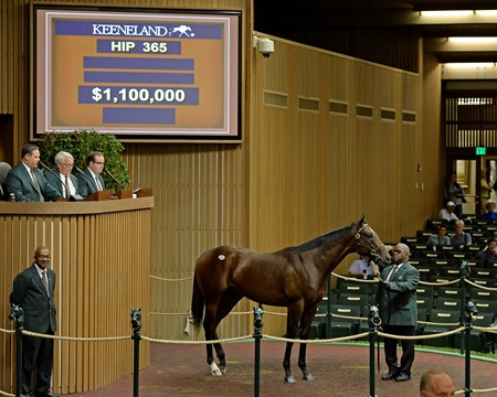 Hip 365 colt by Medaglia d'Oro from Kid Kate brings $1.1 million from Ron Winchell, Winchell Thoroughbreds from Lane's End Farm, agent. Keeneland September sales, yearlings, Sept. 15, 2015.