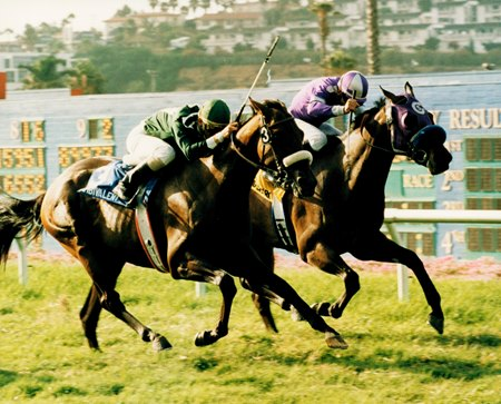 The Barking Shark, rail, finishing second in the 1996 La Jolla H. at Del Mar