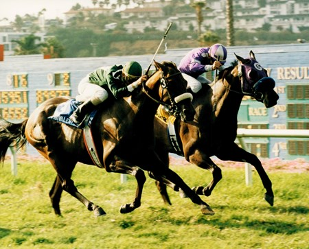 Ambivalent won the La Jolla Handicap at Del Mar in 1996 with R. R. Douglas up. The Barking Shark, rail, finishing second