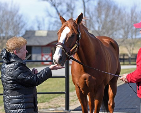 Linda Warner feeding a treat to California Chrome at Taylor Made Stallions in Nicholasville, Ky., on Feb. 10, 2017.