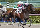 Tequilita Hopes to Go Distance in Gulfstream Oaks