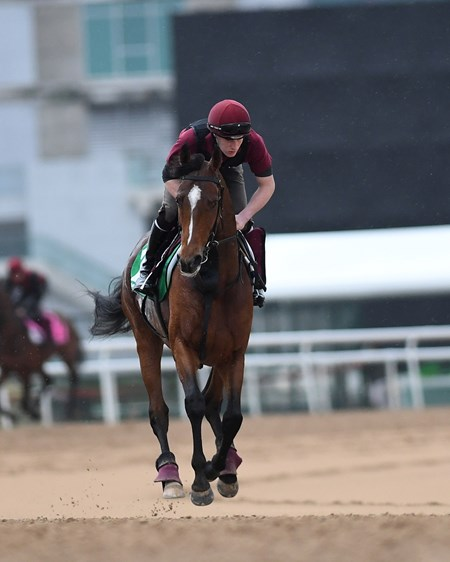 Highland Reel Dubai World Cup -Morning works 3/24/17