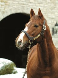 Giant's Causeway Tops 2010 Sires' List