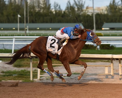 Gunnevera Comes From Clouds In Fountain Of Youth Bloodhorse