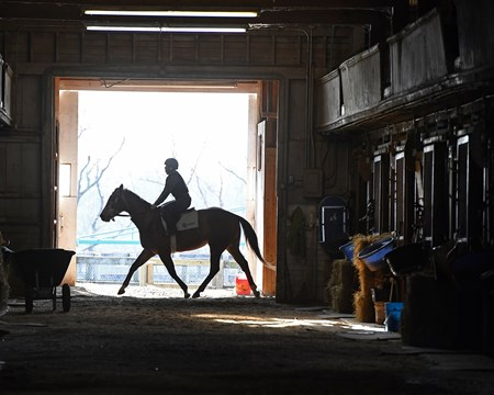 riding test in barn, midterm exams Hands on training for NARA students at the Lexington Thoroughbred Center in Lexington, Ky., on March 9, 2017.  Staff include Remi Bellocq, Dixie Hayes (program coordinator),  Alicia Benben (Academic Coordinator/Instructor), Nicole Carlson (former student, now barn manager).