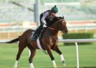 Long On Value trains at Meydan March 20