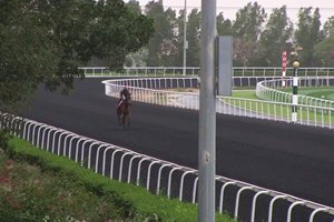 Dubai World Cup: Horses Training, March 24, 2017