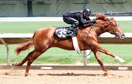 Hip 135, a Tapit colt supplemented into the Barretts select sale of 2-year-olds in training