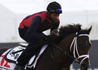Neolithic works ahead of the Dubai World Cup at Meydan