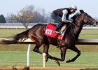 McCraken works six furlongs at Keeneland in 1:13 2/5 for trainer Ian Wilkes