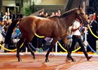 The 3-year-old Hussonet gelding topped the sale at  HK$10.5 million