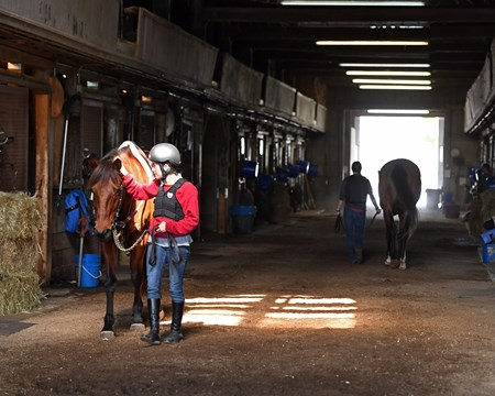 Walking horses during the midterm tests. Hands on training for NARA students at the Lexington Thoroughbred Center in Lexington, Ky., on March 9, 2017.  Staff include Remi Bellocq, Dixie Hayes (program coordinator),  Alicia Benben (Academic Coordinator/Instructor), Nicole Carlson (former student, now barn manager).
