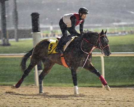 Real Steel - Dubai World Cup -Morning works 3/21/17