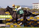 Soul Stirring Stays Perfect in Tulip Sho