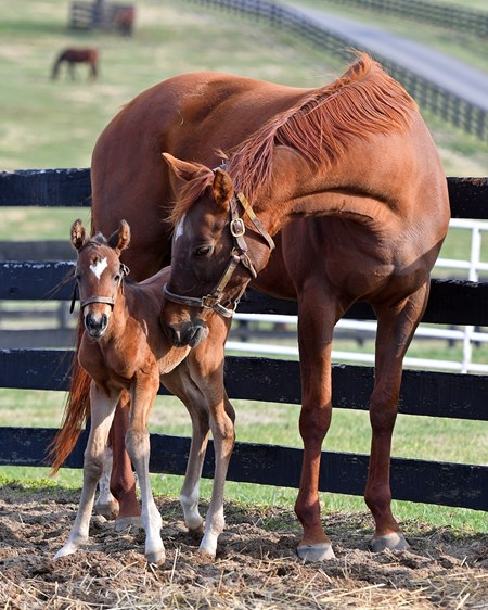 Emotional Kitten with 2017 filly by Bernardini born on March 1.