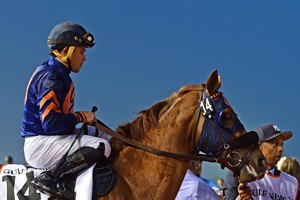 Mind Your Biscuits in Dubai for the Golden Shaheen, which he won