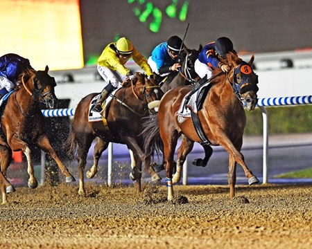 Mind Your Biscuits wins the 2017 Dubai Golden Shaheen
