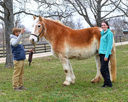Dr. Tina Cassar with Blondie, a Belgian draft nurse mare, working on a lactation induction protocol at Kip and Suzanne Knelman's Farfellow Farm near Paris, Ky. on Feb. 18, 2017.