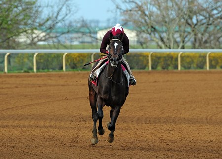 March 30, 2017 McCraken stretches his legs Thursday morning at Keeneland...