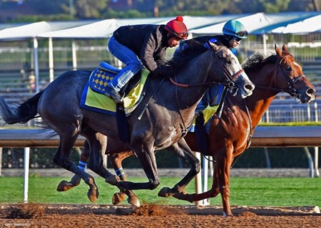 Arrogate - Santa Anita - March 12, 2017