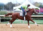 Madefromlucky gallops at Oaklawn Park in March