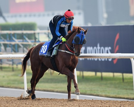 Dubai World Cup -Morning works 3/23/17, Triple Nine, Godolphin Mile