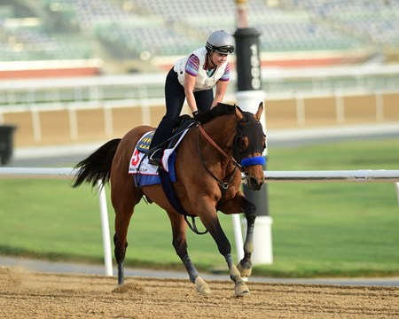 Hoppertunity - Dubai World Cup -Morning works 3/20/27