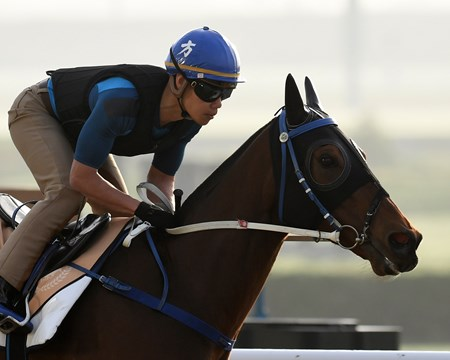 Dubai World Cup -Morning works 3/22/17
