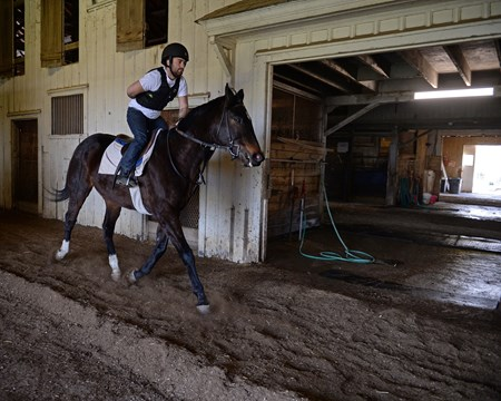 Tamir Mintz on Jackson during riding exam, hand behind back is part of the test Hands on training for NARA students at the Lexington Thoroughbred Center in Lexington, Ky., on March 9, 2017.  Staff include Remi Bellocq, Dixie Hayes (program coordinator),  Alicia Benben (Academic Coordinator/Instructor), Nicole Carlson (former student, now barn manager).