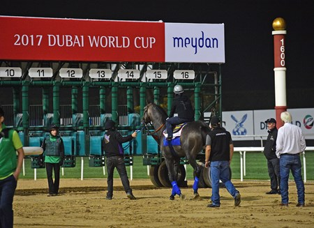 Arrogate Dubai World Cup -Morning works 3/24/17