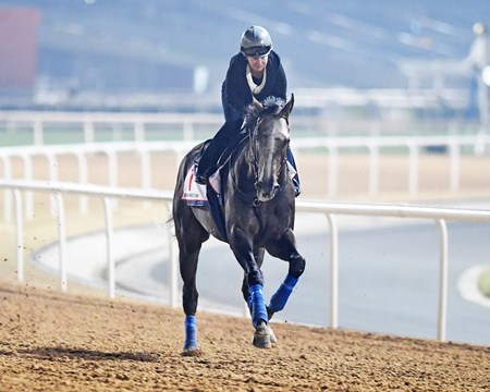 Dubai World Cup -Morning works 3/23/17, Arrogate, Dubai World Cup