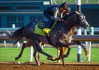 One of Baffert's three challengers, Reach the World works in company at Santa Anita