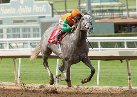 Unique Bella wins the 2017 Santa Ysabel Stakes