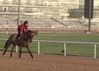 Dubai World Cup: Horses Training, March 23, 2017 Part 4