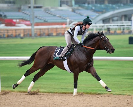 Long On Value - Dubai World Cup -Morning works 3/21/17