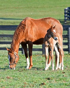 Hessonite with her 2017 American Pharoah colt in early spring at Denali Stud