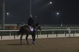 Dubai World Cup: Horses Training, March 23, 2017 Part 1