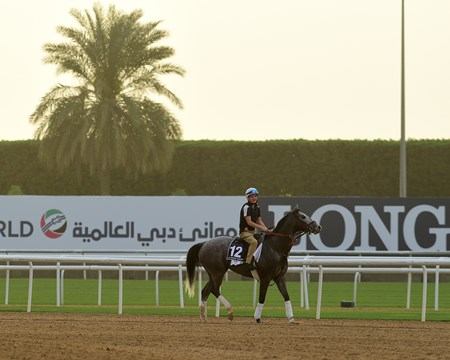 Richards Boy - Meydan - March 20, 2017