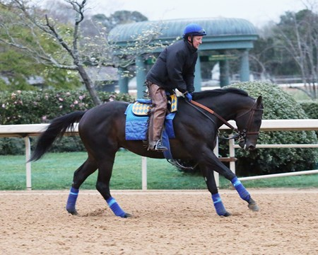 Mor Spirit - Oaklawn Park - March 16, 2017